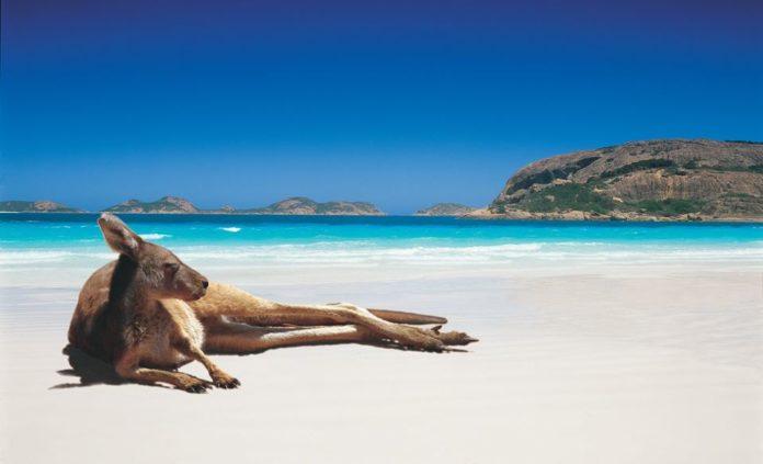 A kangaroo lazing on the beach